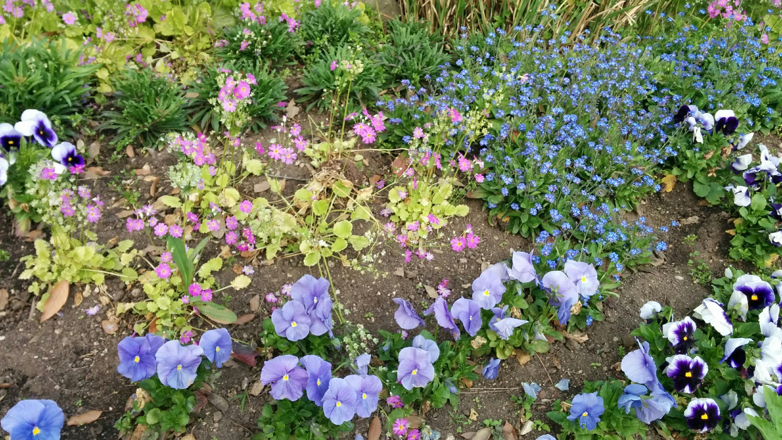 C'est le printemps : fleurs