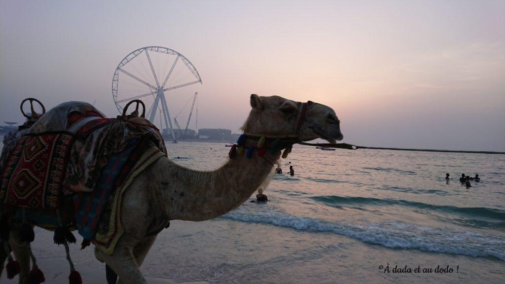 à dada à dos de chameau