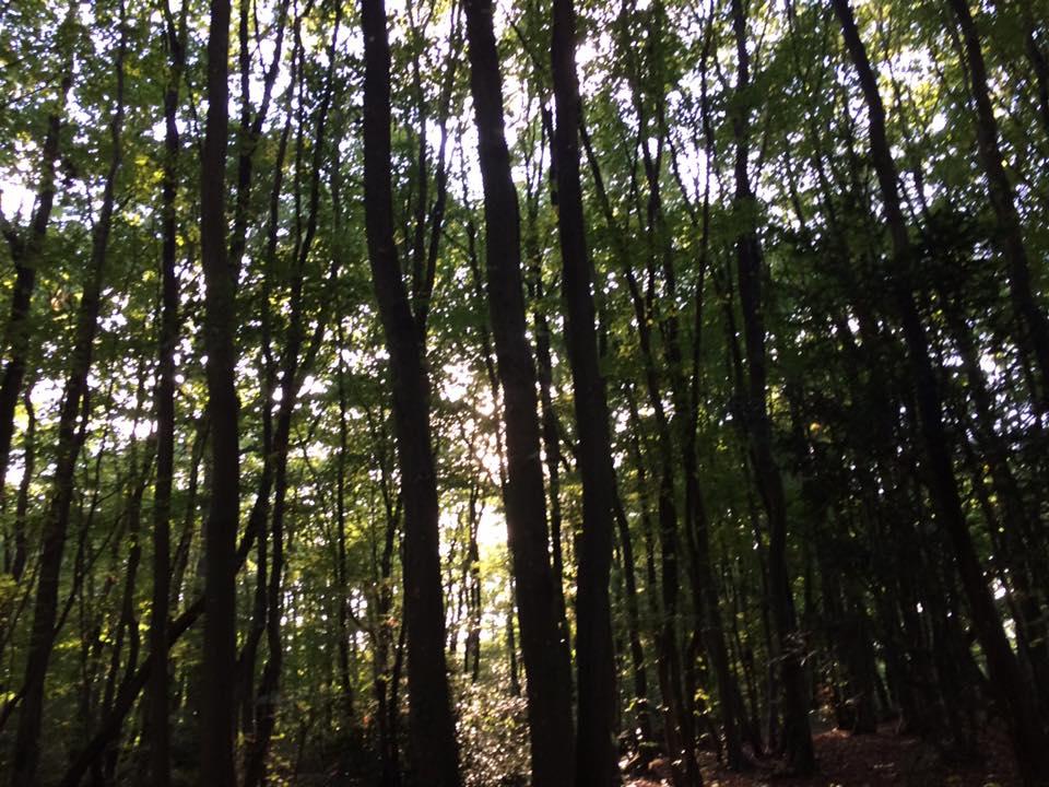 Promenons-nous dans les bois !