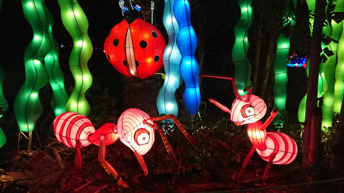 Dubai Garden Glow : les insectes