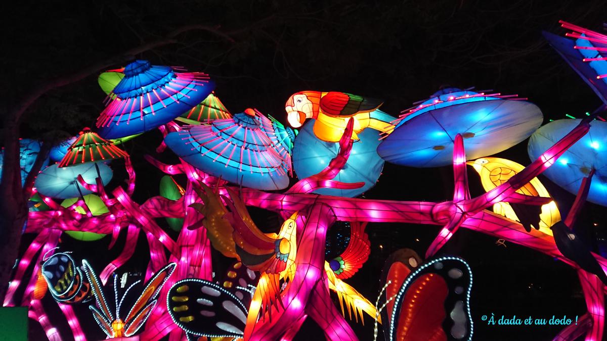 Dubai Garden Glow : les perroquets