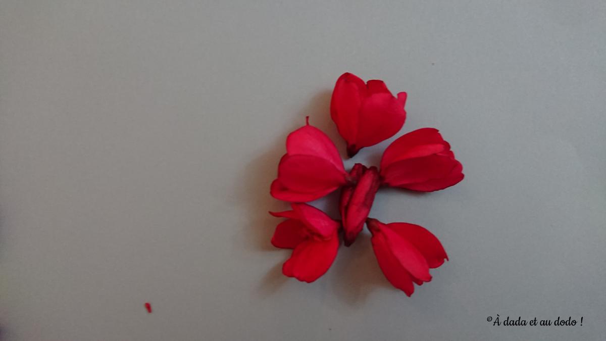 Papillon en fleur