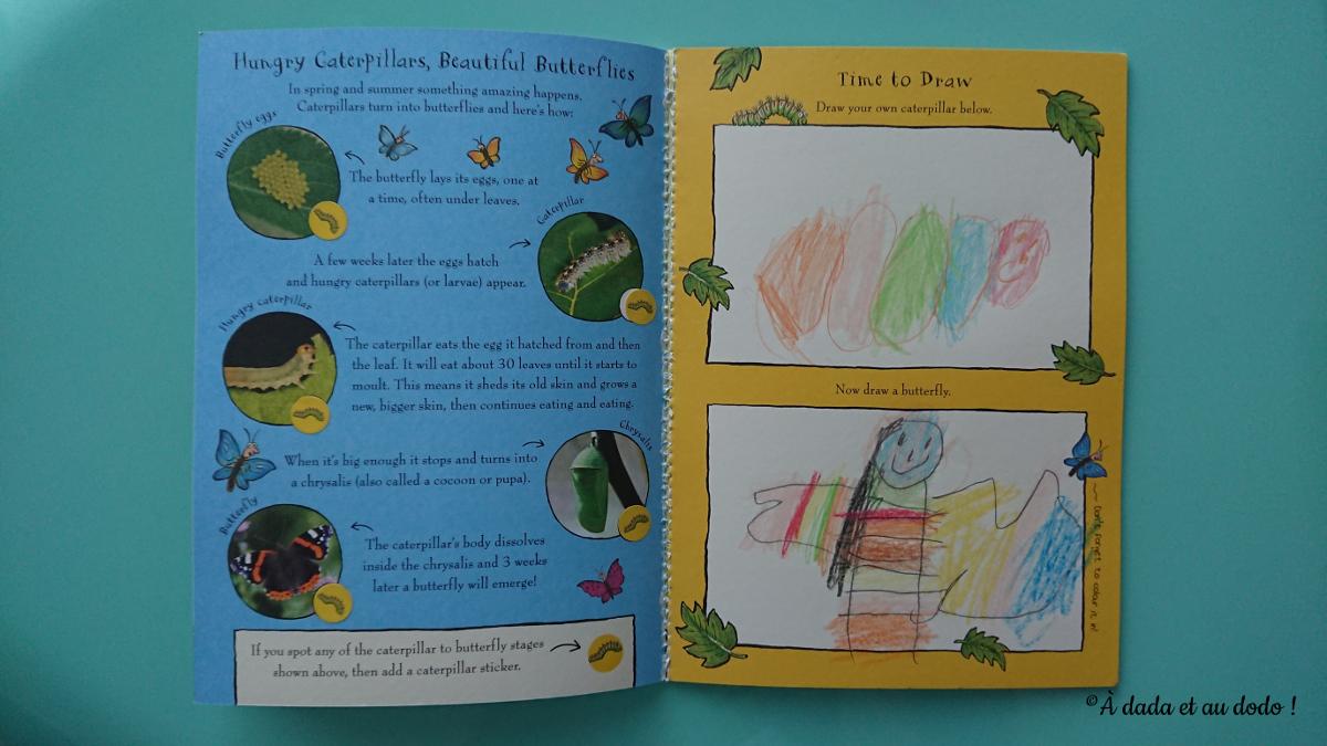 Observer et dessiner chenille et papillon